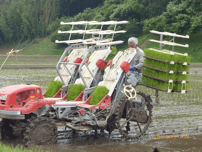 お米作りに挑戦!!