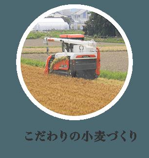 こだわりの小麦づくり